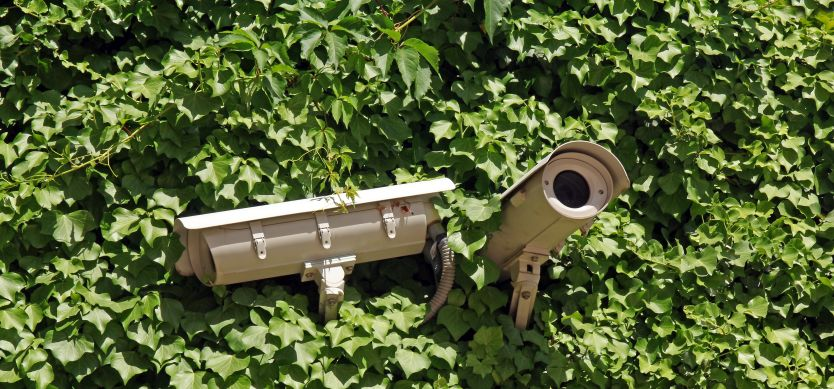 Two security cameras peaking out of a bush.