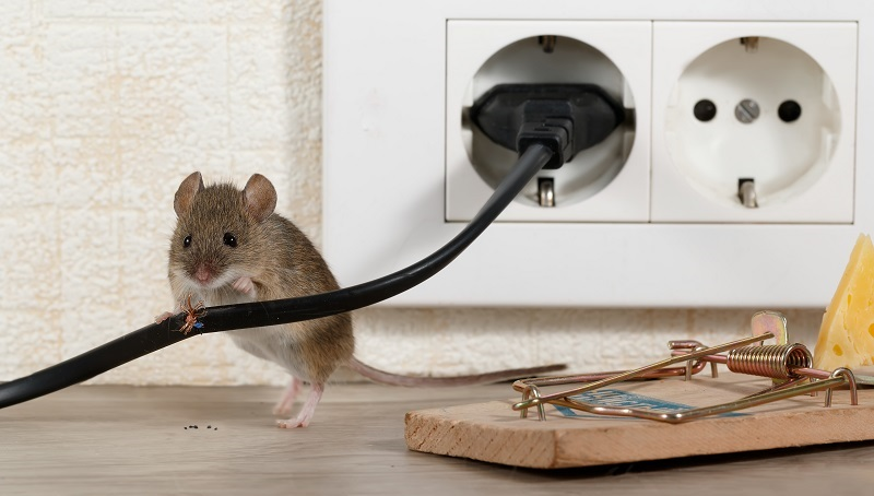 Rodents can damage wiring